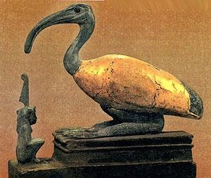 Ibis. The most ancient civilisations of Egypt considered ibises sacred